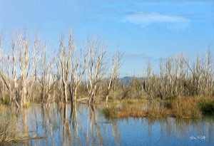 Refreshed - Peace in the Wetlands